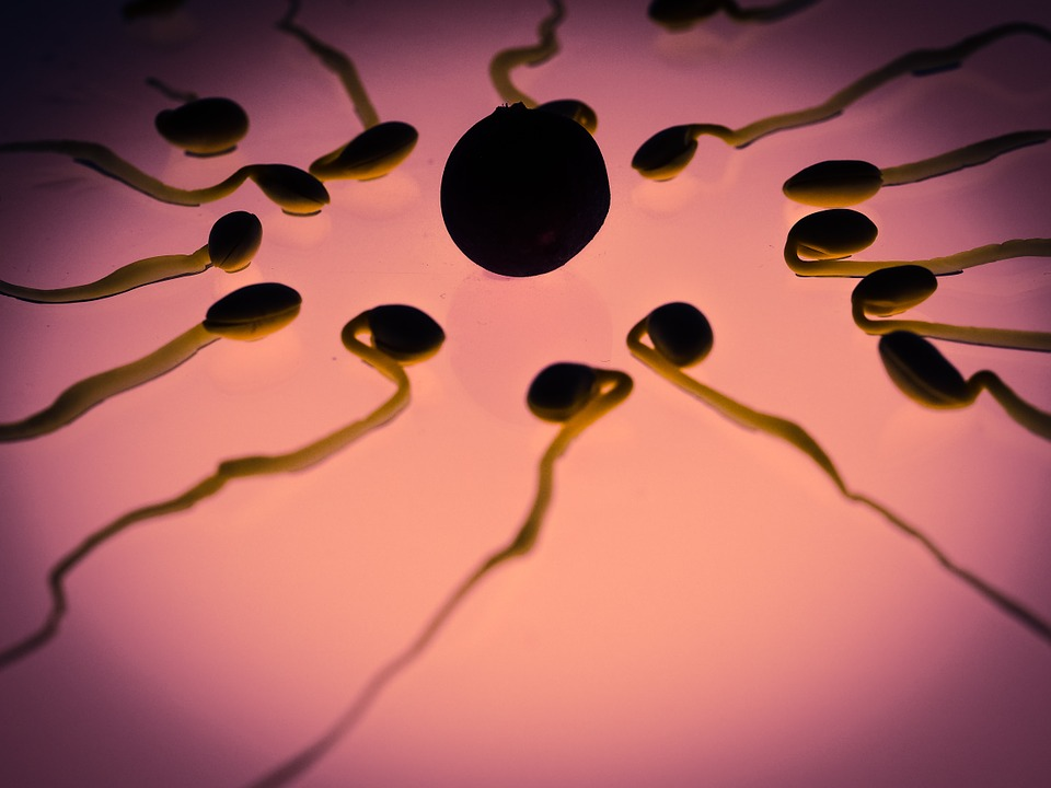 sperm vs semen
